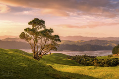 New Zealand (Ed Kruger) Tags: 2016 allrightsreserved aotearoa coromandel coromandelpeninsula edkruger millakruger nz newzealand northisland abaconda blue clouds copyrights farn grass june kirillkruger kiwi landscape lanscape nature qfse rodkruger sea sky summer sun sunny sunrise sunset tractorvel travelphotography tree water manaia waikato