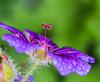 The Tall one. (Omygodtom) Tags: contrast flora flower tamron90mm macro dof d7100 composition colours 7dwf water