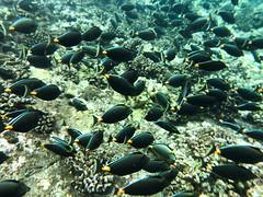 Underwater Friends (Thomas Hawk) Tags: america hawaii maui molokini usa unitedstates unitedstatesofamerica fish kihei us fav10