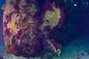Le Donator - Port-Cros - 22/04/2018 (YackNonch) Tags: wreck nauticamna7d canoneos7d aubagneplongéepassion ef815mmf4lfisheye parcnationaldeportcros scubadiving canon app diving na7d portcros propeller eos lieu 7d méditerranée donator plongeur nauticam diver ss scuba prosperschiaffino épave plongée action ef plongéesousmarine gorgone ssysd1 bormesplongée hélice aubagne animal dive cnidaire macro france