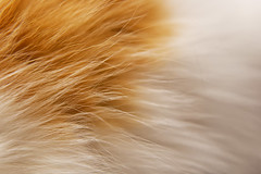 *** (donnicky) Tags: background cat closeup dof fillingtheframe fur home indoors light macro nopeople oneanimal pattern pet publicsec selectivefocus лилу