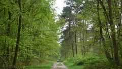 Une promenade en forêt du Rouvray (jeanlouisallix) Tags: rouen saint etienne de rouvray oissel seine maritime haute nnormandie france forêt forest arbres arboriculture nature randonnée sentiers sousbois sylviculture paysage landscape panorama écosysthème