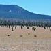 Pumice Desert (north of Crater Lake Caldera, Oregon, USA) 3