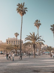Welcome to my account! (oriolfontcasals) Tags: summer palmtree olympus urban sunset barcelona