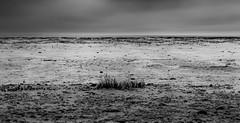 splendid Wadden Sea