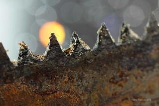 #Jagged #MacroMondays Rusty Saw [explored]