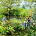 The Pond thumbnail