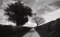 28 Lane with trees (I ♥ Minox) Tags: film 2018 ilfordpanf panf ilfordpanfplus panfplus ilford olympus om1 om1n om1072 olympusom1 olympusom1n 50asa