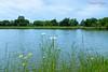 Parc Floral à Bordeaux (Ezzo33) Tags: france gironde nouvelleaquitaine bordeaux ezzo33 nammour ezzat sony rx10m3 parc jardin fleur fleurs flower flowers bleu blue blanche white paquerette étang lac