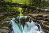 Primavera en Añisclo (4) (sostingut) Tags: d750 nikon tamron haida pirineos montaña seda río cascada bosque primavera madera árbol verde agua soledad