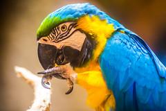Adult Conversations (Thomas Hawk) Tags: america citymuseum citymuseumstlouis missouri stlouis usa unitedstates unitedstatesofamerica bird parrot us fav10 fav25