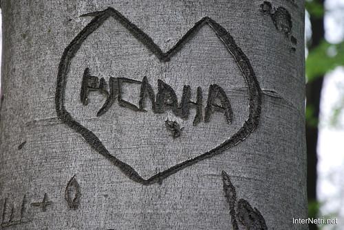 Ботанічний сад імені Гришка Буковий гай InterNetri  Ukraine 086