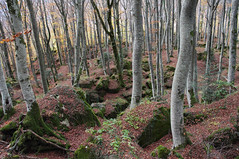 Il bosco di La Verna (LLauraNLS) Tags: appennino casentino foresta forest forestecasentinesi sentierodelleforestesacre trekkingdelleforestesacre trekking hiking dogtrekking dogs landscape paesaggi foliage nature mountains pentax