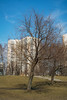 Chertanovo.Spring.Tree (f0t0R0man) Tags: 2018 april eos350d ef2890mmf456 moscow tree