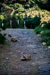 DSC_0283-ps (studiofuntas) Tags: tomogashimaisland tomogashima island wakayama japan unpopulatedisland sunnyday ruins 友ヶ島 和歌山 加太 無人島 uninhabitedisland desertisland