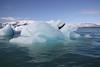 20170819-110725LC (Luc Coekaerts from Tessenderlo) Tags: austurland iceland isl jökulsárlón glacier gletsjer glacierlake gletsjermeer icefloe ijsschots iceberg ijsberg blue splitdef191029jokulsarlon public nobody landscape waterscape cc0 creativecommons 20170819110725lc coeluc vak201708iceland