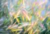 Dreamy (KESS Photos) Tags: luz light d750 nikon espiga wheat naturaleza nature perales
