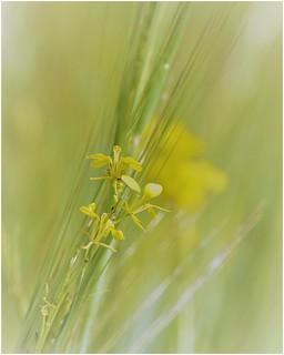wildflowers ... ( 2 )