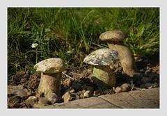 Champignons durs (afantelin) Tags: pierre jardin imaginaire champignons yonne bourgogne burgundy