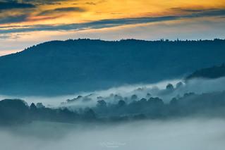 foggy morning magic