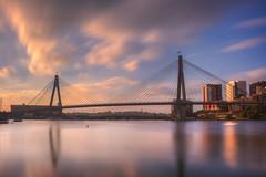 Anzac Bridge, Sydney (S♡C) Tags: sydney anzacbridge sydneyharbour blackwattlebay cablestylebridge
