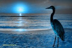 BLUE DAWN. (Viktor Manuel 990.) Tags: sea dawn sunrise amanecer aurora heron garza sky cielo blue azul digitalart artedigital textures texturas querétaro méxico victormanuelgómezg digitalpainting pinturadigital