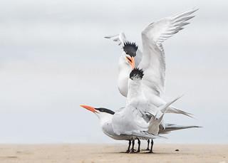 Beak Bite!!!