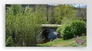 Along the river Mölndalsån (8)
