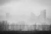 Steelers Home. (Marie-Laure Even) Tags: 2018 america americain american américain amériquedunord and architecture bw black blackandwhite blanc brouillard building city downton et etatsunis fog marielaureeven mist nb noir noiretblanc northamerica northernamerica park pennsylvania pittsburgh roadtrip town travel usa unitedstatesofamerica view ville voyage white