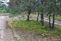 Волинський ліс InterNetri Ukraine 0055194571