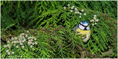 Alone Again IV (lukiassaikul) Tags: creativephotography photopainting digitalpainting watercoloureffect nature wildbirds gardenbirds urbanwildlife bluetit