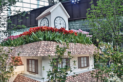 Tulipmania Floral Display (chooyutshing) Tags: flowers tulips flowerdome tulipmaniafloraldisplay gardensbythebay baysouth marinabay singapore