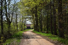 April (JoannaRB2009) Tags: spring nature path road light shadow sunny sunshine sunlit tree trees forest woods building grabownica lowersilesia dolnyśląsk polska poland dolinabaryczy green