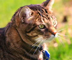 la good 1 (Kens images) Tags: lance friend fur animals fun strength cats dogs backyard colour canon 40 d