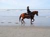 Seepferdchen (Werner Schnell Images (2.stream)) Tags: ws seahorse horse seepferdchen pferd beach strand nordsee belgien dehaan