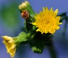Some Kind Of Weed (Tim @ Photovisions) Tags: macro closeup flower weed plant yellow