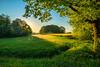 Morninglight (Franks Fotoecke) Tags: schwarzwald morgenlicht feld himmel gras field baum tree sky morninglight wonderful