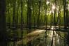 Lever de soleil dans un marais de l'Île-Cadieux! / Sunrise in a swamped woodland! (Pentax_clic) Tags: imgp0665 ilecadieux lever soleil marais swamp sunrise 2017 robert warren pentax