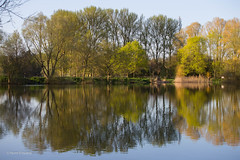 Oundle (norm.edwards) Tags: green park blossom spring love lovely amazing april oundle summer 2018 fresh yellow brown nature natural light contrast vivid northamptonshire countryside wonderful uk springwatch bbc loveit lake blue deep reflections best photos photography canon canon6d 6d