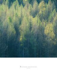 Birchwood, Ore Mountains, Saxony, Germany (Nils Leonhardt) Tags: forest tree spring oremountains germany saxony sachsen erzgebirge birkenwald nikond810 nikkor goldenhour deutschland matte nature