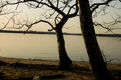 Trees chilling on the Beach (dzmears) Tags: sand landscape peaceful woods water day trees beach scenery tree river forest scenic pretty neck mason bay