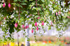 Hanging Baskets (s.d.sea) Tags: fuchsia basket hanging spring floral flower flowers plant plants sale grow garden greenhouse green pink bloom blossom blossoms kirkland washington washingtonstate pnw pacificnorthwest pentax k5iis eastside lwtech horticulture