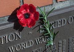 Shadows of Remembrance (OzzRod) Tags: sony a7rii helios44m58mmf2 war memorial anzac rosemary popy plaque cemetery sandgate newcastle dailyinapril2018