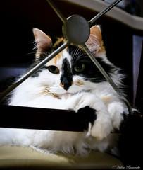 IMG_0797-1 (Helene Bassaraba) Tags: coth5 catmoments bestofcats