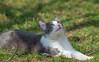 kittens (58) (Vlado Ferenčić) Tags: kitty kittens vladoferencic catsdogs vladimirferencic cats zagorje hrvatska croatia nikond600 sigma15028macro