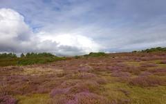 Dorset, England (east med wanderer) Tags: dorset england uk middlebere pooleharbour heather clouds pines