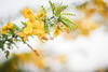 Flora (VikramDeep) Tags: canon eos 550d 50mm f8 bokeh flowers colors yellow leaves