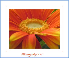 Happy 'Koningsdag' !! (♥ Annieta ) Tags: annieta april 2018 sony nederland netherlands koningsdag koning king birthday verjaardag feest oranje orange allrightsreserved usingthispicturewithoutpermissionisillegal
