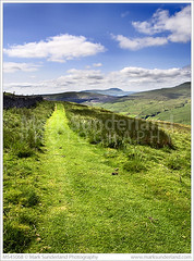 The Pennine Bridleway below Great Knoutberry Hill with Ingleborough in the Distance (© Mark Sunderland www.marksunderland.com) Tags: bluesea bridleway britain britishisles clouds country countryside cumbria cyclepath dentdale england europe footpath gb grass grasses grassland greatbritain greatknoutberryhill greengrass hill hills ingleborough landscape longgrass lush nationalpark nationaltrail path penninebridleway publicfootpath recreationalroute sunny sunnyday track trail travel uk unitedkingdom upland verdant whiteclouds yorkshiredales dent