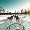 Finland (Zeeyolq Photography) Tags: dogs landscape sled finland rovaniemi husky finlande laponie lapland snow
